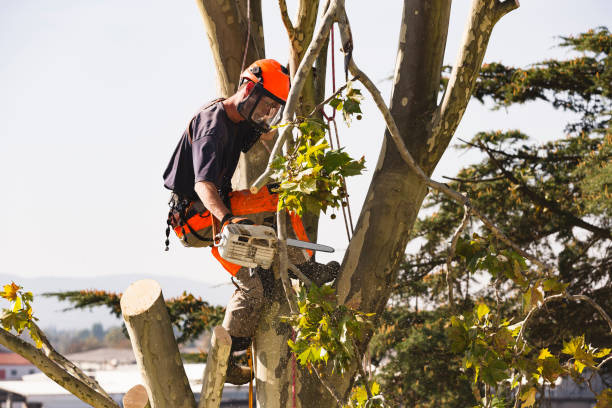 tree removal cost knoxville tn