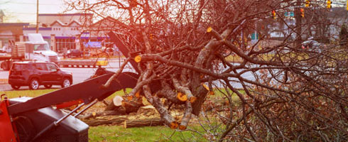 emergency tree removal knoxville tn